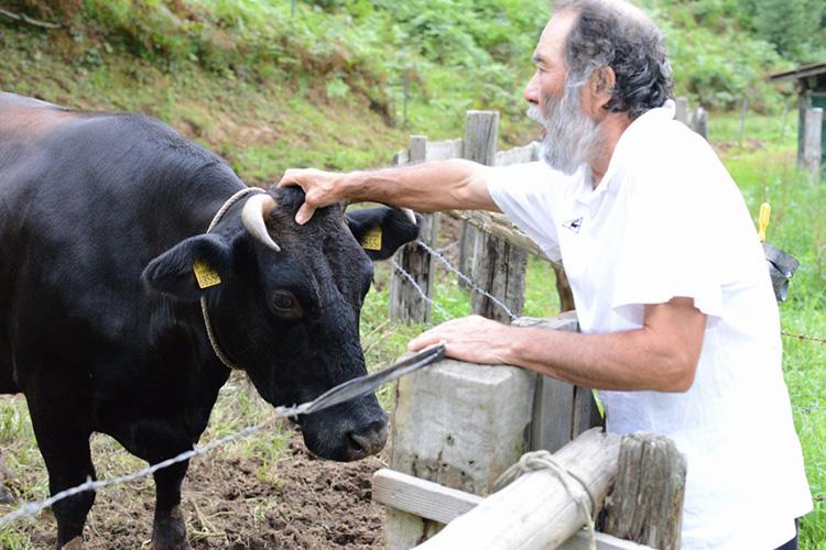 飼い牛と篠原さん