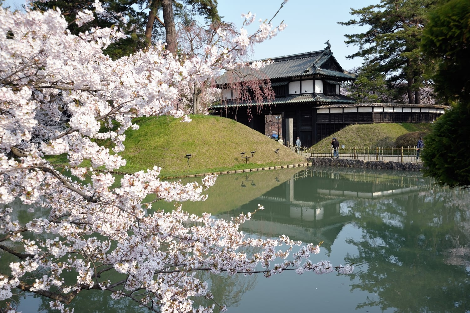 弘前公園桜の昼と夜