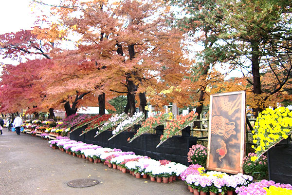 10月 菊と紅葉まつり
